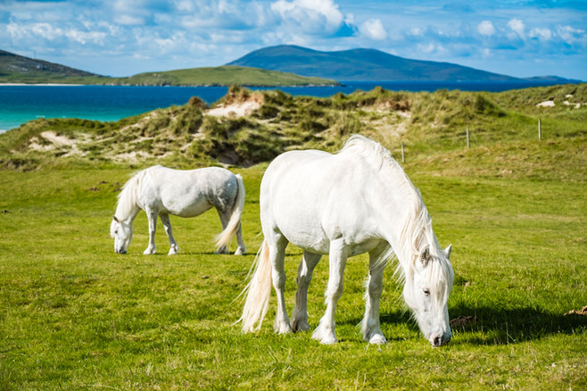 White horses, Luskentyre, Isle of Harris