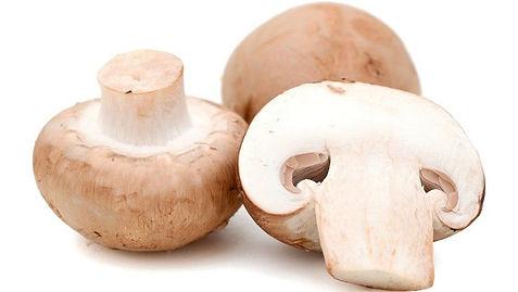 Mushroom640-1.jpg