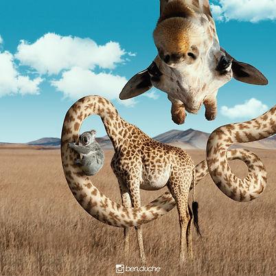 Giraffe_compressé.jpg