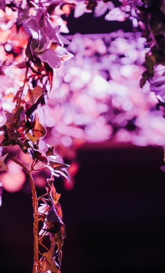 Bomen in paars licht Zomerbar Glasfabriek Gent