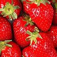 varieties-strawberry-merced-lassen-canyo
