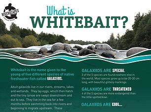 Whitebait Poster