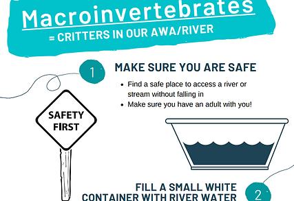 Macroinvert investigation worksheet.png