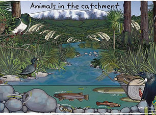 Animals in Catchment Poster GWRC