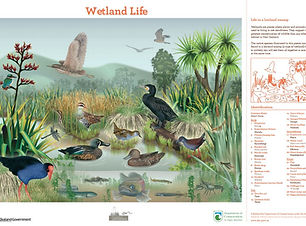 Wetland Life poster DOC