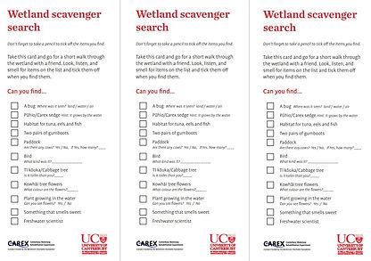 Wetland Scavenger Search CAREX.JPG