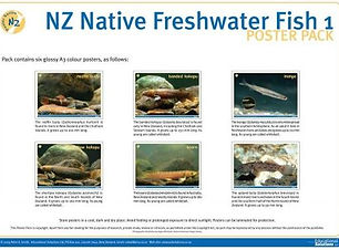 NZ Native Fish Poster Pack Science Resource Box