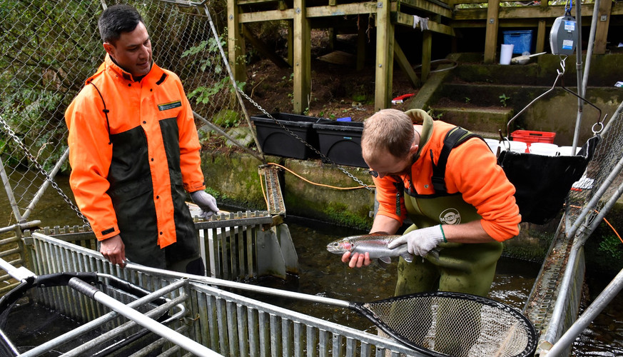 Assessing Trout