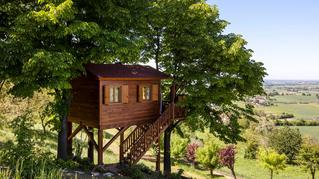 Vacanze alternative: le case sull'albero più belle del mondo