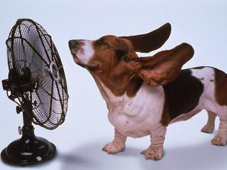 Buoni consigli per l'utilizzo del climatizzatore in modo intelligente