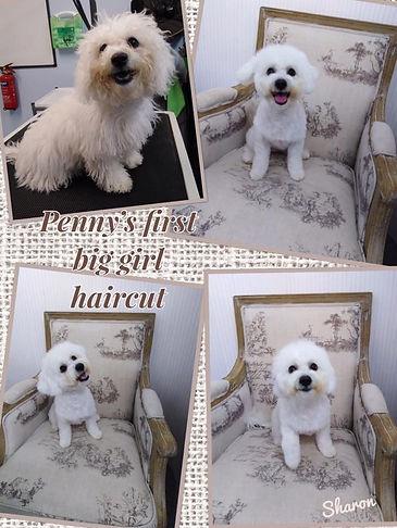pennys first haircut.jpg