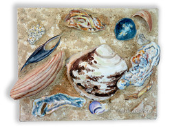 Sand and Shells 2 _copyright Marian Osher