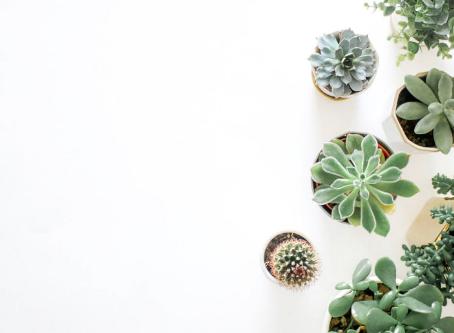 Plantinhas fáceis de cuidar em casa
