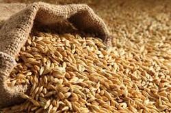 barley sac