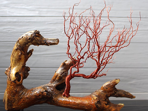 Red Rootless
