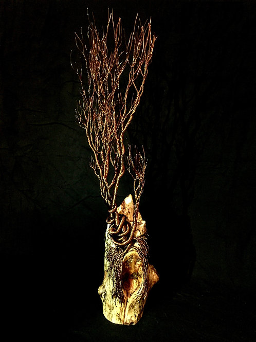Cave Roots
