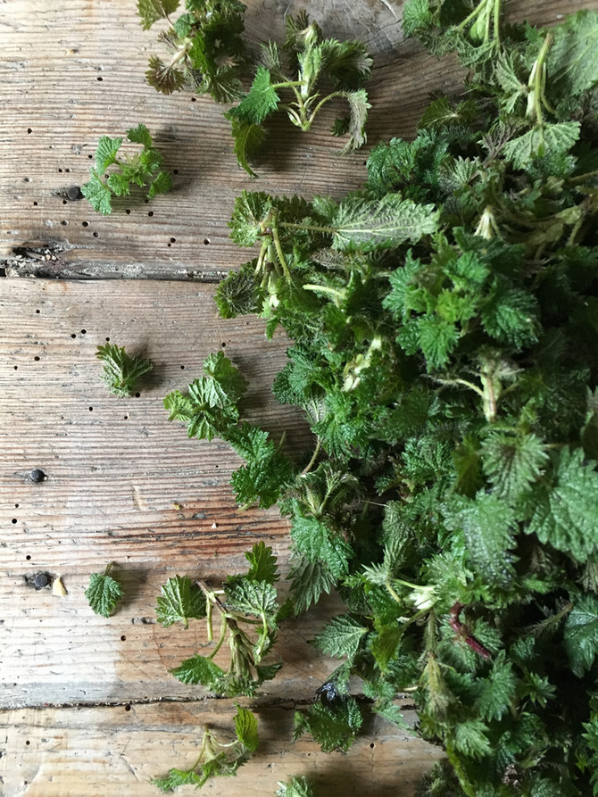 Nettle Soup with Horseradish & Chives