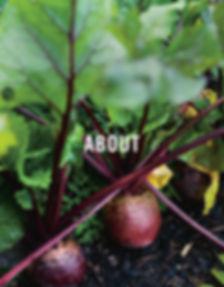 Homegrown beetroot