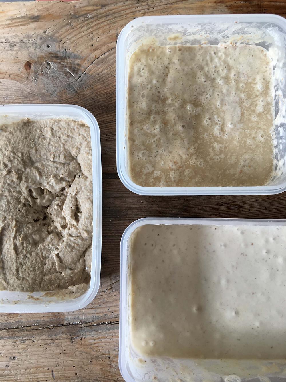 Three sourdough starters: rye, white and spelt