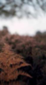 Fern leaf, autumnal hedgerow