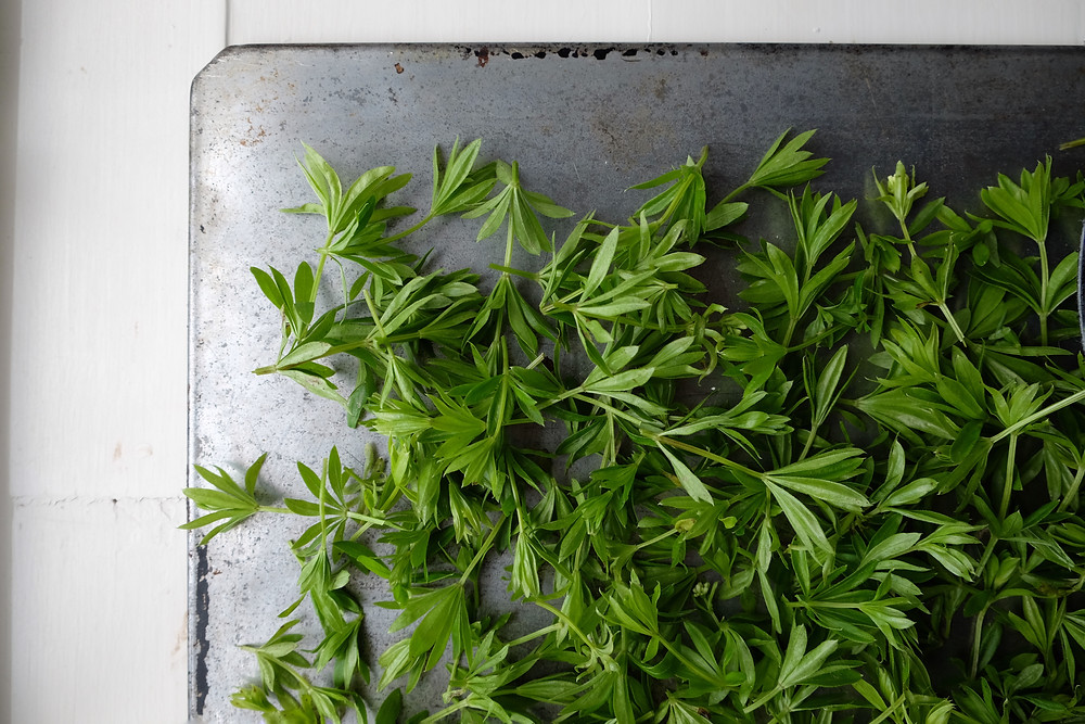 Sweet Woodruff ready to dry