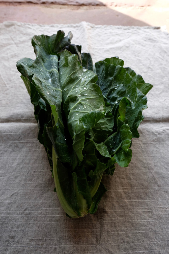 That Spring Cabbage