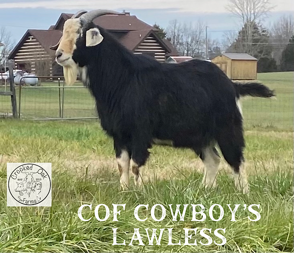 COF LAWLESS.png
