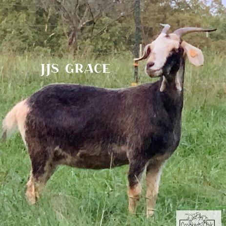 JJS GRACE