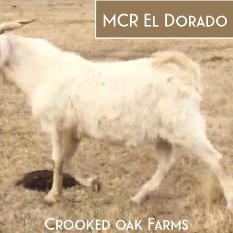MCR EL DORADO