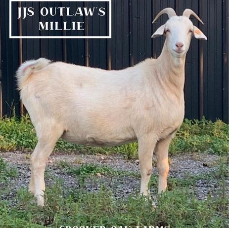 JJS OUTLAW MILLIE