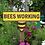 Thumbnail: Peeping Bee garden sign