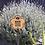 Thumbnail: Bee friendly zone, no harmful sprays