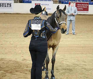 Showmanship_at_Scottsdale_01.jpg