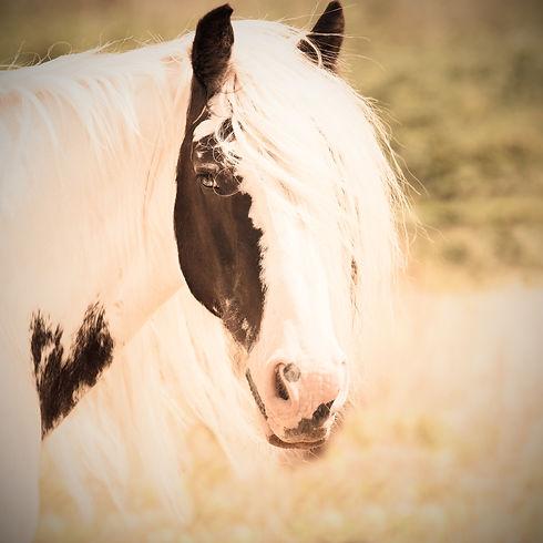 horse-1198003_edited.jpg
