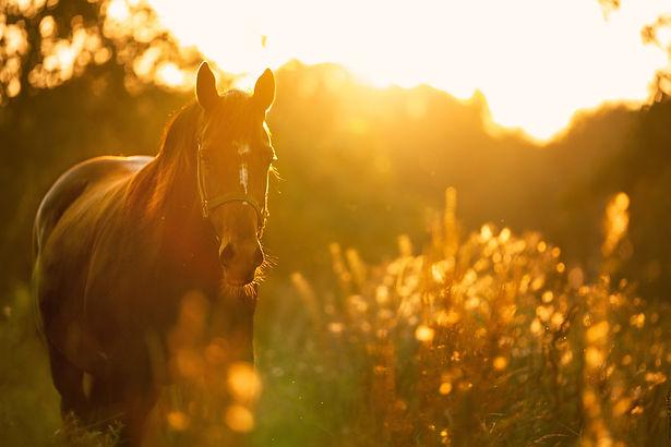 horse-4810484.jpg