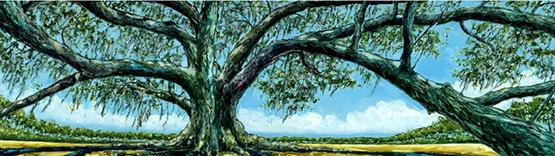 Grocery Oak