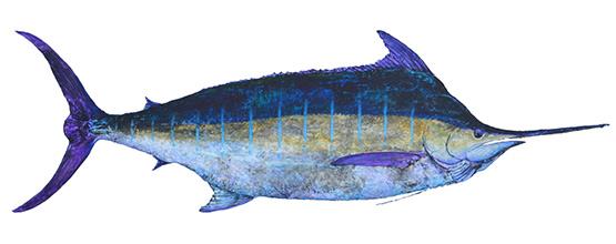Billfish-Gyotaku