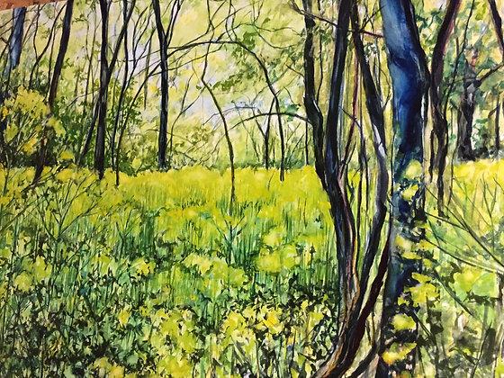 Yellow Swamp