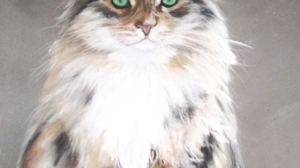 Pastel animalier chat