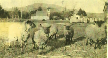glen school and sheep (3).jpg