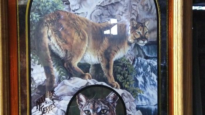 Coors Mirror (Cougar).jpg