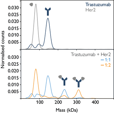 Trastuzumab Her2 binding.png