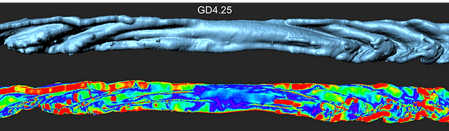 Heat map quantifying folding in a pregnant mouse uterus.