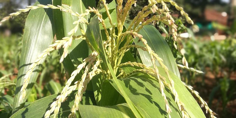 Avances de la Agroecología en la transformación de los sistemas agroalimentarios frente al cambio climático