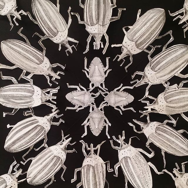 Insect Mandala drawing technique by grad