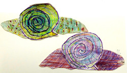 Snails by Kinder and Year 1