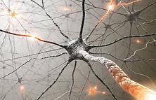 Neurone, sistema nervoso nella riabilitazione neurologica, fisioterapia secondo concetto Bobath, riabilitazione neuromotoria, metodo Perfetti, Vojta, Rieducazione neuromotoria presso studio di fisioterapia a Ozzano dell'Emilia