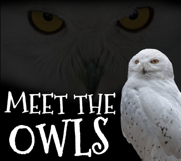 MEET THE OWLS