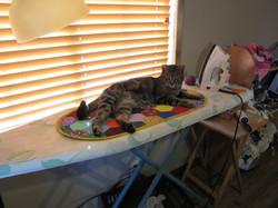 cat mat 015