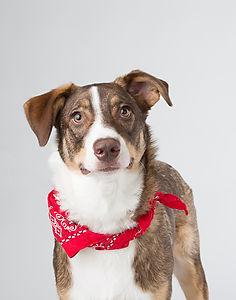 Dog Background Animal Station